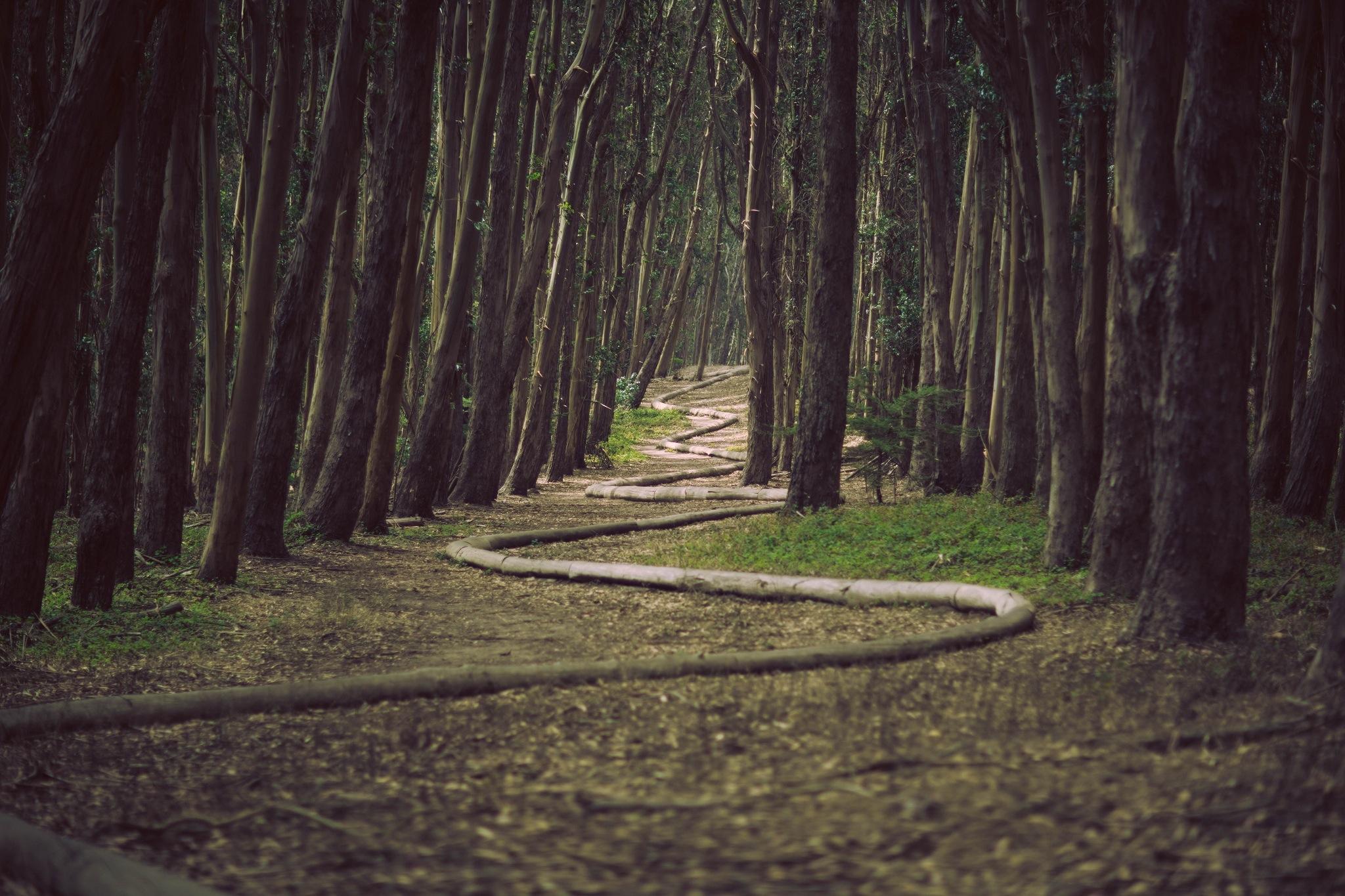 Puchar Leśniczego - Zyskaj mój szacunek - biegaj i ćwicz w lesie oraz wszędzie indziej